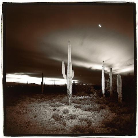 Richard Misrach (American, born 1949); Desert Cactus;