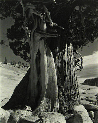 Edward Weston (American, 1886-1958); Juniper Tenaya Lake;