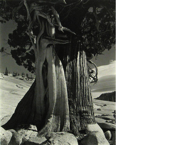 Edward Weston/Cole Weston Juniper Tenaya Lake 1937 silver print
