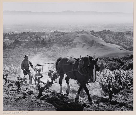 Ansel Adams (American, 1902-1984); Spring at Paul Masson Vinegards;