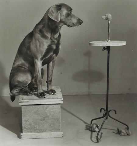 William Wegman (American, born 1943); Contemplating the bust of Man Ray;
