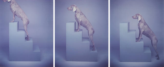William Wegman (American, born 1943); Saving Up (Dog on Steps); (3)