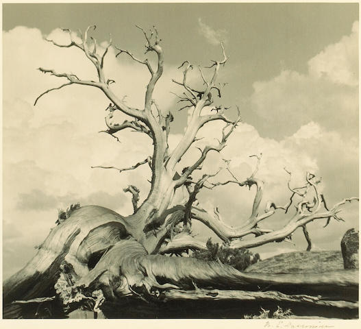 William E. Dassonville (American, 1879-1957); Weathered Tree;