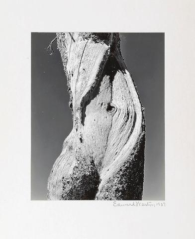 Edward Weston (American, 1886-1958); Pine, Lake Tenaya;