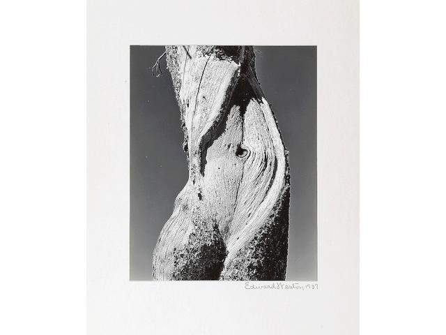 Edward Weston (American, 1886-1958); Pine, Lake Tenaya;