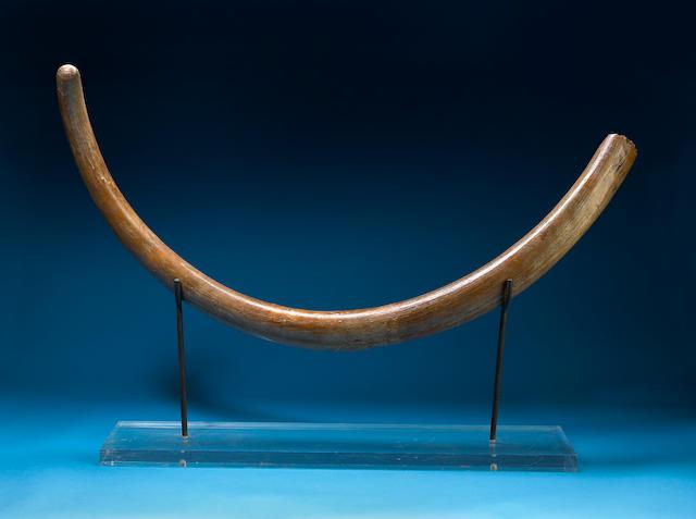 Bonhams : Woolly Mammoth Tusk