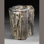 Large Polished Petrified Wood Stump