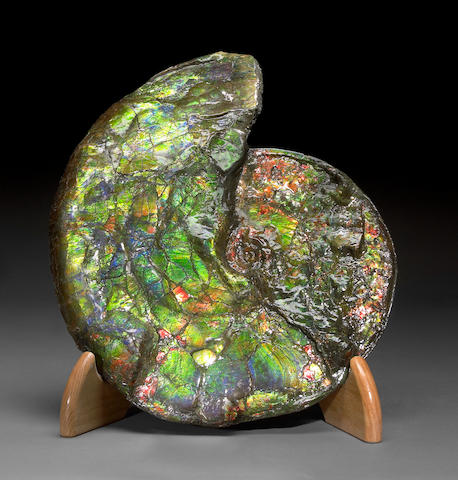 Canadian Ammonite 5(913)