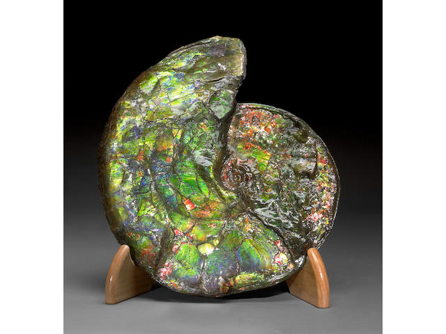 Large Opalescent Ammonite on Stand