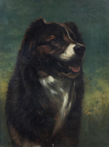(n/a) John Henry Dolph (American, 1835-1903) A study of a dog 21 x 16in