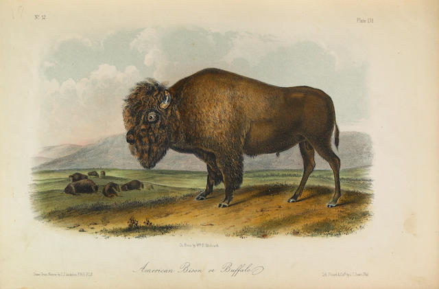 AUDUBON, JOHN JAMES, and BACHMAN, JOHN. The Quadrupeds of North America. New York: V.G. Audubon, 1851-53-54.