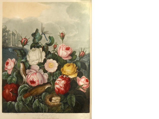 THORNTON, ROBERT JOHN. 1768-1837. -------CHECK WATERMARKS-------- New Illustration of the Sexual System of Carolus von Linnaeus Comprehending... the Temple of Flora, or Garden of Nature.  London: for the Publisher, by T. Bensley, [1799]-1807.