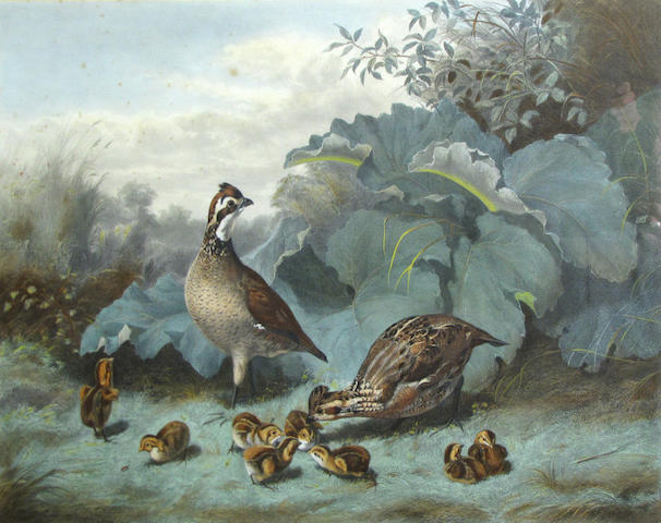 Artist Unknown, * NEEDS VALUE, FMV $300 * Quail and chicks, color lithograph, 17 1/4 x 23 1/2in;