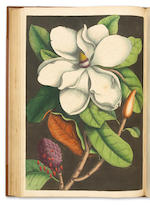 CATESBY, MARK The Natural History of Florida, 3rd edition. 1771.
