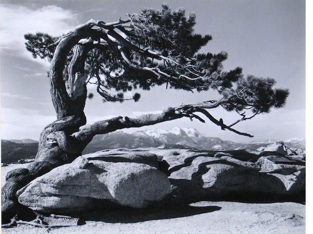 Ansel Adams (American, 1902-1984); Jeffrey Pine, Sentinel Dome, Yosemite;