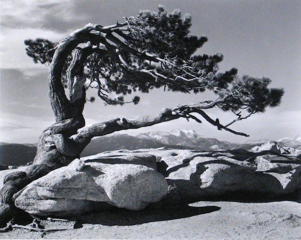 Ansel Adams (American, 1902-1984); Jeffrey Pine, Sentinel Dome; Moonrise from Glacier Point; (2)