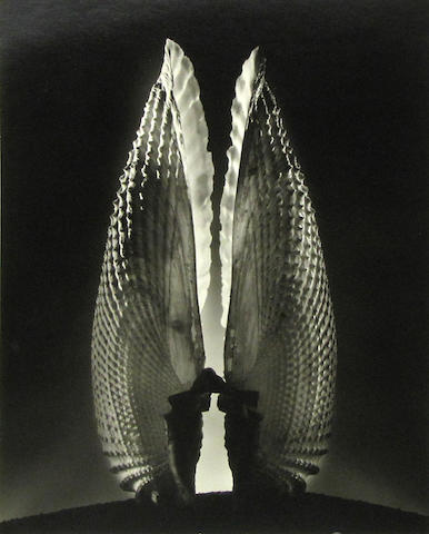 Ruth Bernhard (American, 1905-2006); Angel Wings;