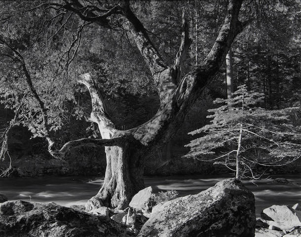 Ansel Adams (American, 1902-1984); Morning, Merced River Canyon, Yosemite National Park;