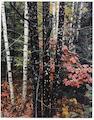 Eliot Porter (American, 1901-1990); Intimate Landscapes;