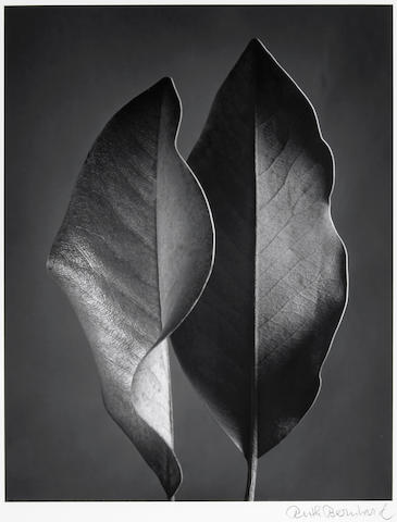 Ruth Bernhard (American, 1905-2006); Two Leaves;