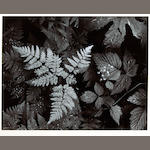 Ansel Adams (American, 1902-1984); Leaves, Mount Rainier National Park, Washington;