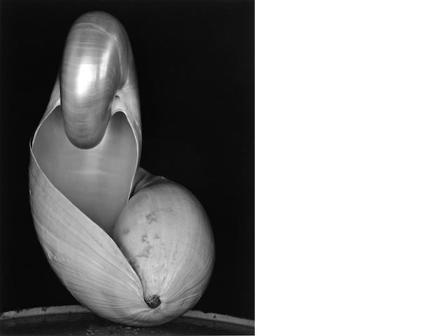 Edward Weston (American, 1886-1958); Two Shells;