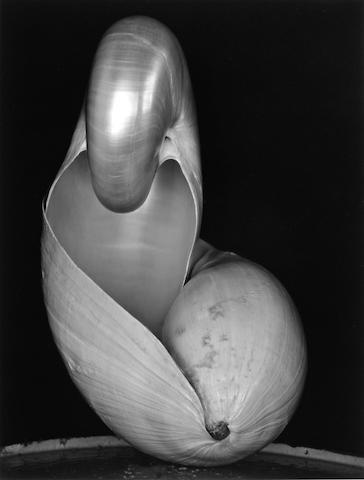 Edward Weston (American, 1886-1958); Two Shells;