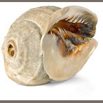 Conch Shell Trumpet, pu, Hawaiian Islands