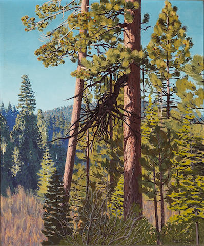 (n/a) Richard Thompson Taggart (American, 1904-1989) Old Pine at Tahoe, 1936 30 x 25in