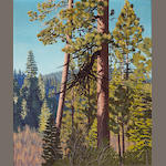 Richard Thompson Taggart (American, 1904-1989) Old Pine at Tahoe, 1936 30 x 25in