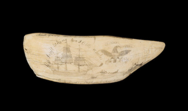 A large scrimshawed sperm whale's tooth<BR /> 8-3/4 in. (22 cm.) length.
