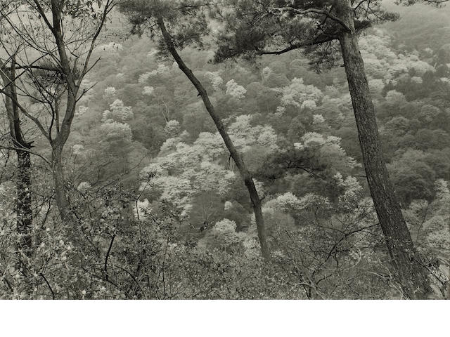 Lee Friedlander (American, born 1934); Kyoto;