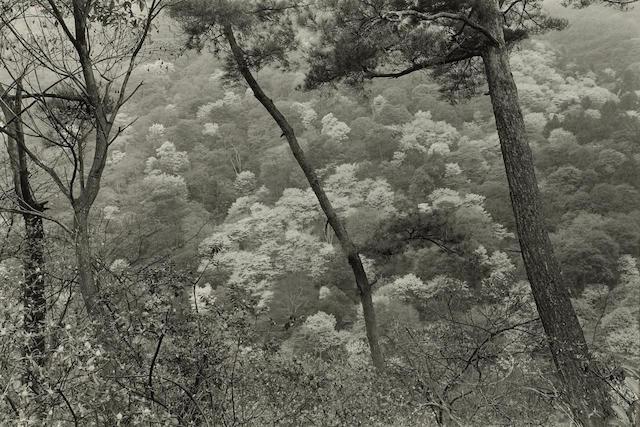 Lee Friedlander (American, born 1934); Kyoto;