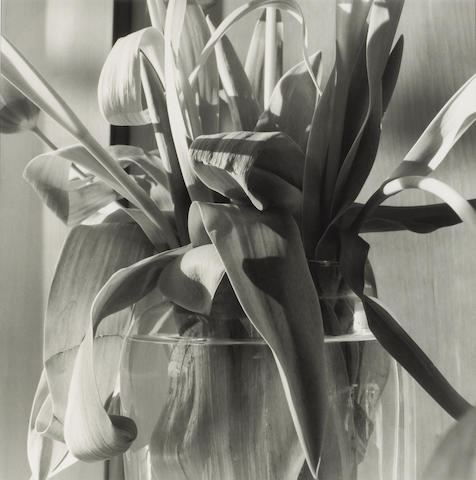 Lee Friedlander (American, born 1934); Stems;
