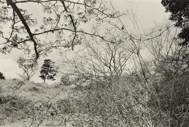 Lee Friedlander (American, born 1934); Bequ;