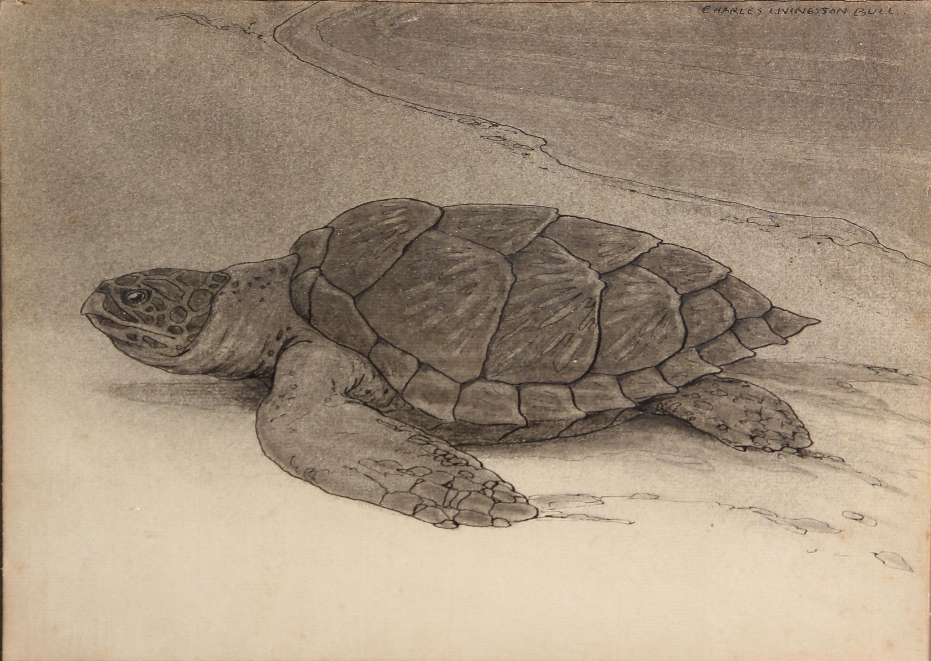 Картинки среднеазиатских черепах и только