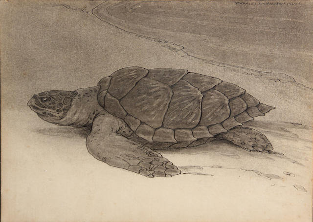 Charles Livingston Bull (American, 1874-1932) Turtle on the shore sight: 8 3/4 x 12in