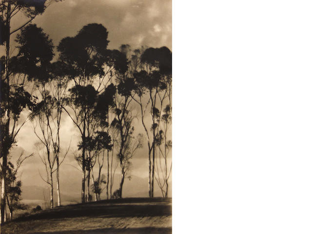Possibly John Stich (Australian); The Charm of the Blue Gums;