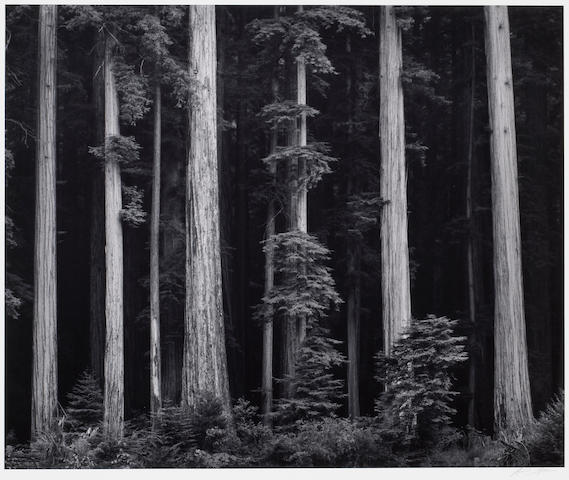 Ansel Adams (American, 1902-1984); Redwoods, Bull Creek Flat, Northern California;
