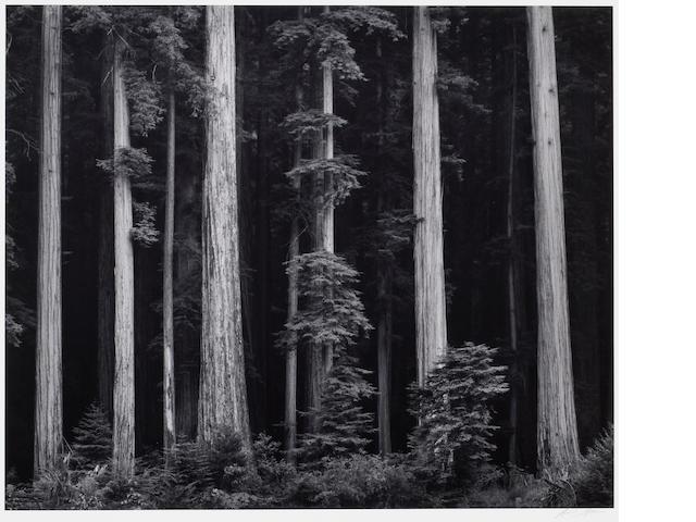 Ansel Adams (American, 1902-1984); Redwoods, Bull Creek Flat;