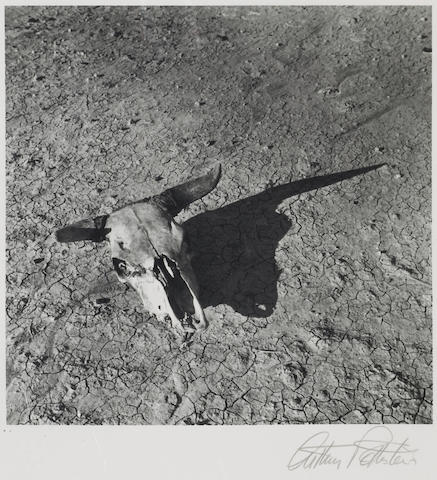 Arthur Rothstein (American, 1915-1985); Skull of Steer in Badlands of South Dakota;