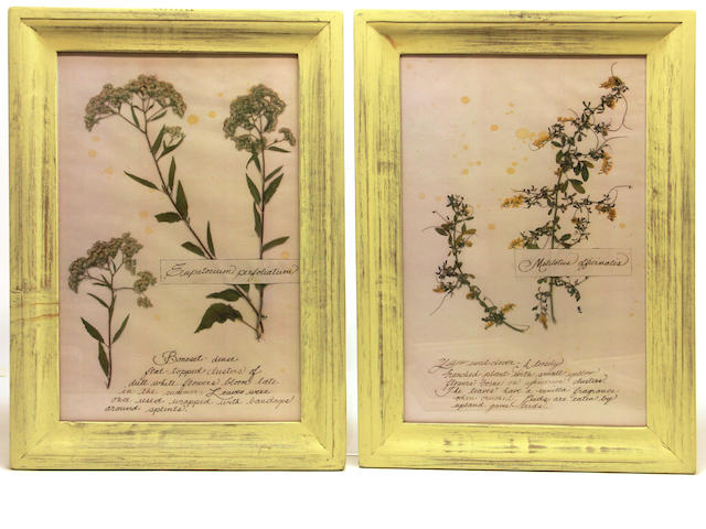 Eight fashion prints and two framed pressed and dried botanical specimens