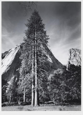 Ansel Adams (American, 1902-1984); Trees and Cliffs;