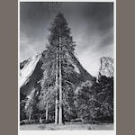 Ansel Adams (American, 1902-1984); Trees & Cliffs;