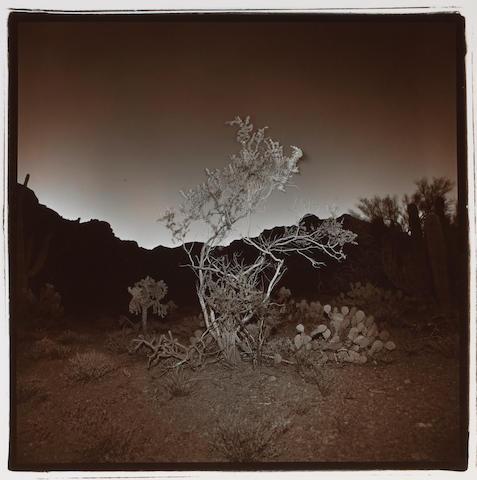 Richard Misrach (American, born 1949); Burning Bush #2;