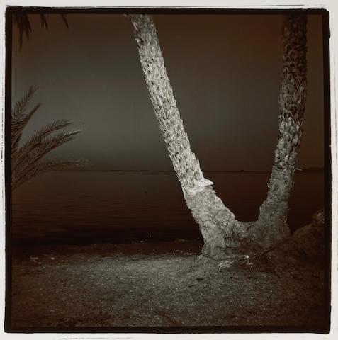Richard Misrach (American, born 1949); Palm #7, Baja;