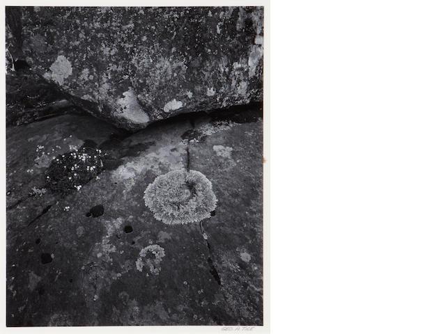 George Tice (American, born 1938); Wild Flowers, Lichen and Rocks, Colorado;