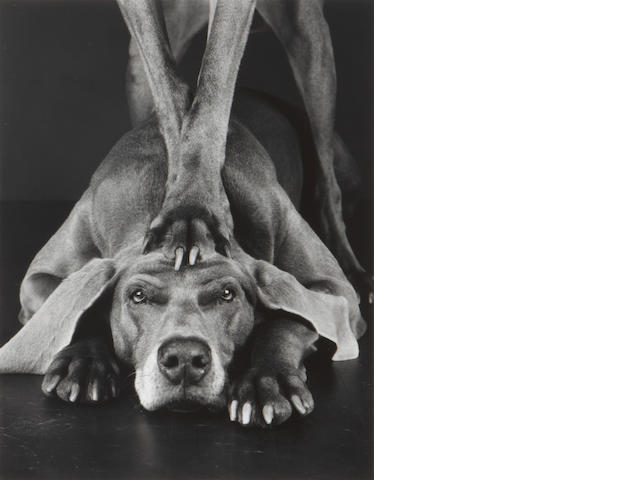 William Wegman Paw Fay Gelatin silver print;