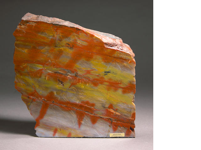 Petrified Wood Specimen