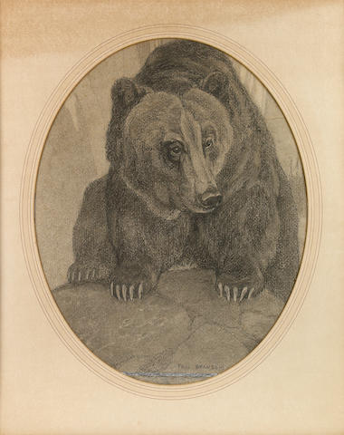 Bransom, Paul. Charcoal on board. Bear. Oval, 14 x 17.